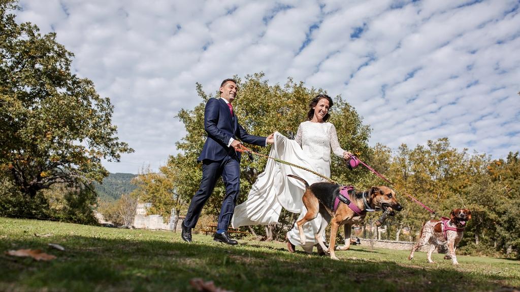 Pareja de novios corriendo con sus perros en el campo.